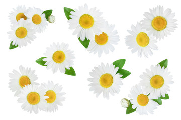 Papiers peints Marguerites one chamomile or daisies with leaves isolated on white background, Set or collection
