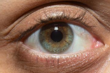 Closeup Macro Photo of Green Iris Eye