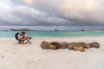Animal wildlife nature photographer tourist photographing Galapagos Sea Lion in sand lying on beach on Gardner Bay Beach, Espanola Island, Galapagos Islands, Ecuador, South America.