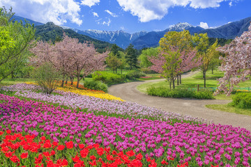 Fototapeta 長野県・春の国営アルプスあづみの公園 obraz