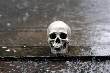 human skull in the rain halloween scary nightmare