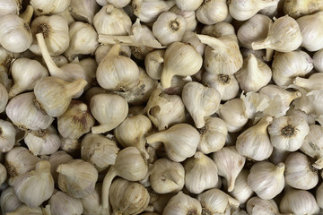 White garlic. Fresh garlic on market. Vitamin healthy food spice.