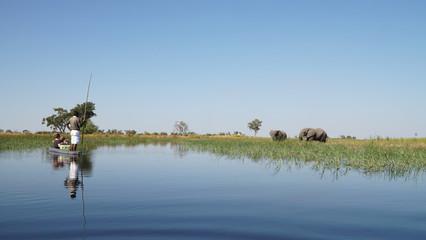 Elephants roaming in the wetlands of the Okavango Delta in Botswana, Africa.