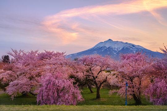 青森県・岩木山と桜の夕暮れ