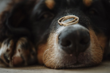 dog ring wedding