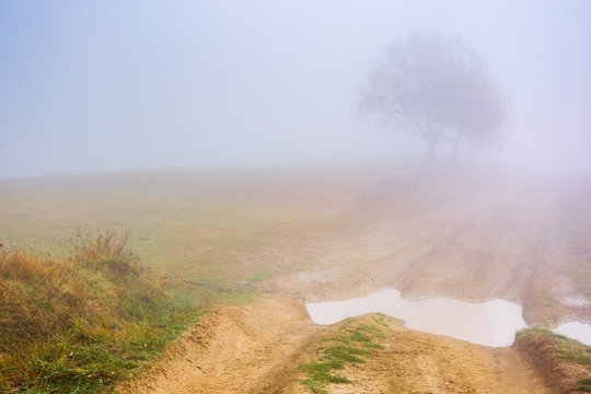 dirt road through the meadow at foggy sunrise. beautiful autumn scenery in the morning. wonderful nature background in misty weather. lonely tree in the distance