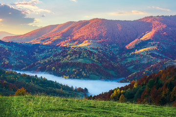 Photo sur Aluminium Bleu nuit magical sunrise in mountains. valley full of fog. beautiful autumn scenery. trees in colorful foliage. idyllic atmosphere of carpathian countryside
