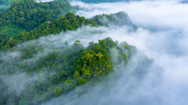 Aerial view of Asia morning mist at tropical rainforest mountain, Background of beautiful forest and mist, Aerial top view background amazon forest.