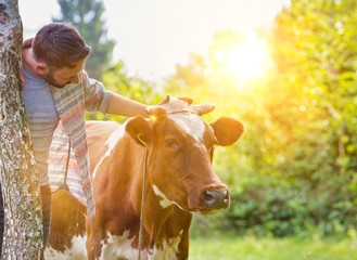 Attractive male farmer tending his cow in farm with yellow lens flare in background