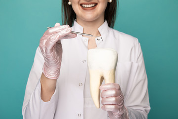 Closeup picture of model tooth and dentist's instrument in doctor's hands isolated
