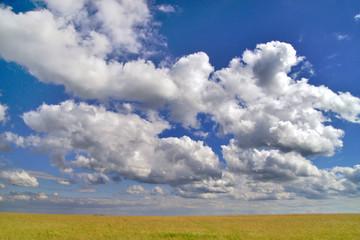 Wiese vom wolkigen Himmel überragt