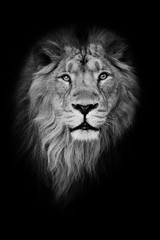 Poster Lion Black-white portrait, isolated black background. Muzzle powerful male lion with a beautiful mane close-up.