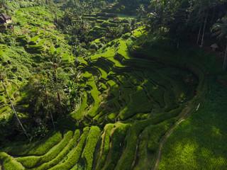 Tuinposter Bali Bali Beautiful Tegalalang's Rice Terrace Aerial drone view.