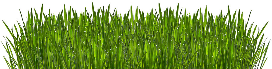 Photo sur Toile Herbe Green grass with dew isolated on white background