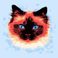Portrait of siamese cat in pop art style