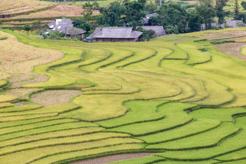 Printed roller blinds Rice fields Green terraces rice field at Mu Cang Chai