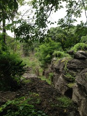 Rocks and Trees in Jungle