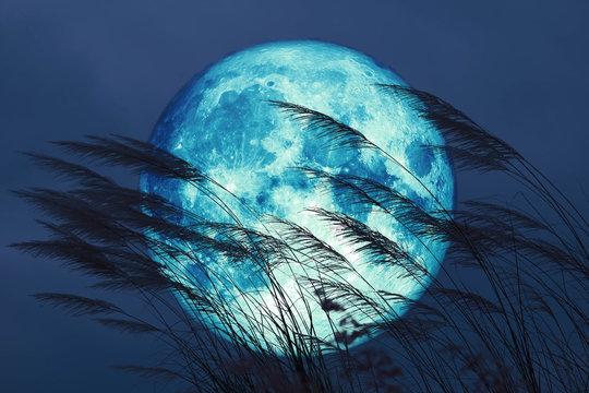 super full harvest moon on night sky back grass flower in the field