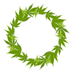 Hemp leaf wreath Isolated on white background. Vector illustration of green medical plant cannabis in cartoon simple flat style. Round frame, border.