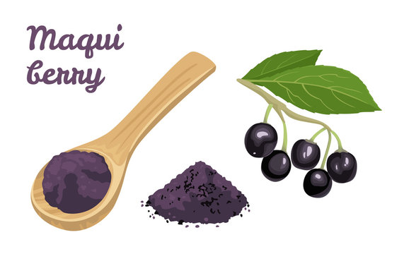 Maqui berry powder in wooden spoon isolated on white background. Maqui berry branch with green leaves and heap of powder.