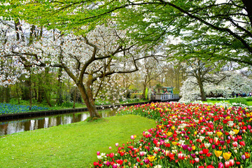 Poster Vieux rose Keukenhof royal park of flowers and tulips in the Netherlands. Beautiful outdoor scenery in Holland