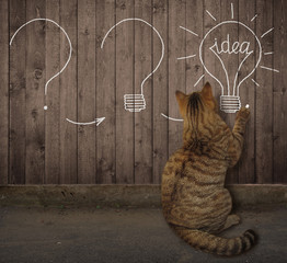 """The cat is standing near the street wooden fence on which a chalk drawn light bulb with a word """" idea """" instead of a filament."""