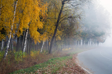 Printed roller blinds Black A winding road in the autumn forest. Trees with yellowed leaves by the road.