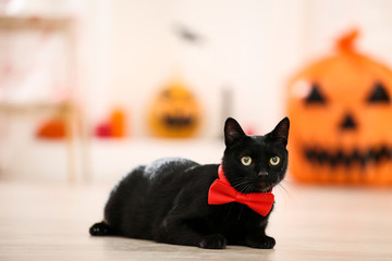 Black cat with red bow tie lying at home