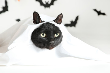 Black cat in white halloween costume