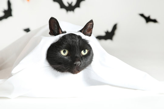 Black cat in white halloween costume