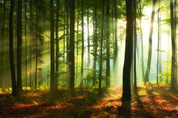 Obraz Piękny poranek w lesie  - fototapety do salonu