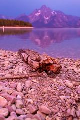 Driftwood on Jackson Lake