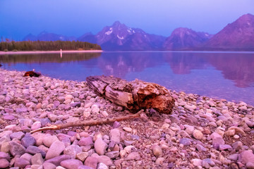 Driftwood in  Grand Teton National Park