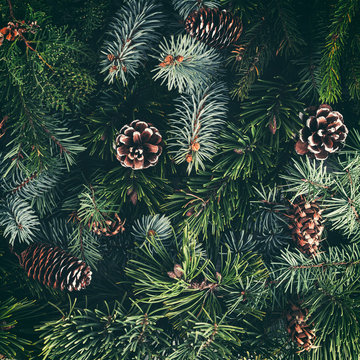 Holiday background of Christmas tree branches, spruce, juniper, fir, larch, pine cones. Xmas and New Year theme. Flat lay, top view, toning