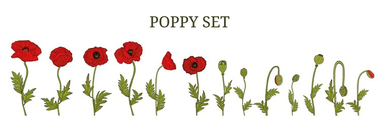 Decorative vector red poppy flowers and leaves in hand draw style, design element. Floral decoration for invitations, greeting cards, banners.