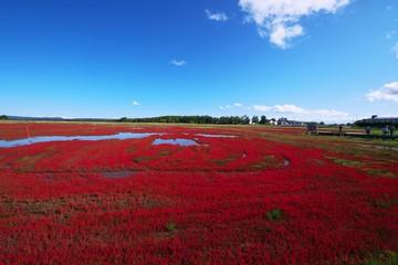 Acrylic Prints Bordeaux 真っ赤に染まったアッケシソウ