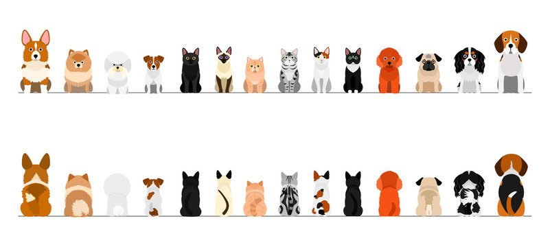 small dogs and cats border border set, full length, front and back