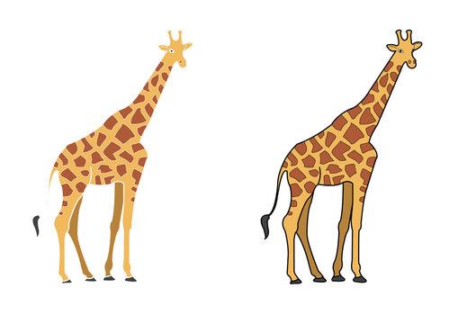 Giraffe cartoon for Kids. Colored  giraffe  cartoon or giraffe cartoon  clipart vector