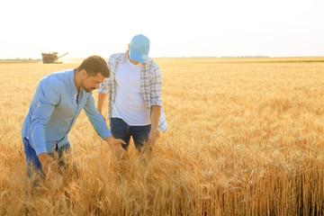 Male farmers working in wheat field Fotoväggar