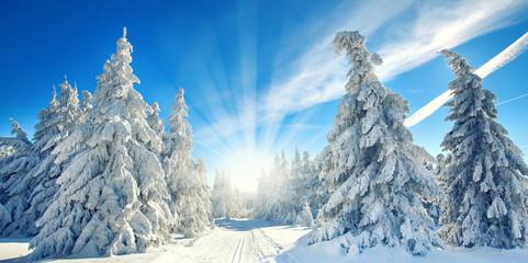 magischer Winterwald Fototapete