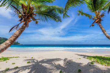Fototapete - Coconut palm trees on tropical beach on paradise island.