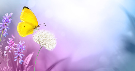 Fototapete - Yellow  butterfly close-up macro on wild meadow fluffy flower in spring summer on  beautiful soft blurred blue pink violet background. Gentle artistic image of nature, copy space.