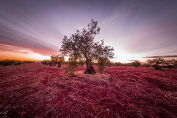 Photo sur Plexiglas Bordeaux Atardecer , fotografia nocturna y paisajes de Extremadura