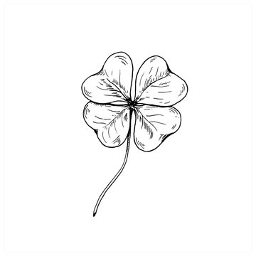 Clover sketch. Hand drawn four leaf clover. Vector illustration, isolated on white