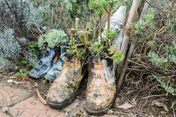 Old boots reused as pot plants.