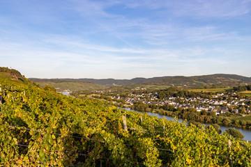 Panoramablick auf das Moseltal mit dem Weinort Brauneberg im Hintergrund an einem sonnigen Herbsttag kurz vor Sonnenuntergang
