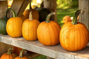 A display of miniature pumpkins.