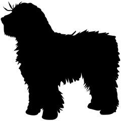 Spanish Water Dog  Silhouette Vector
