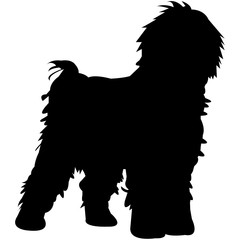 Spanish Water Dog  Silhouette Vector