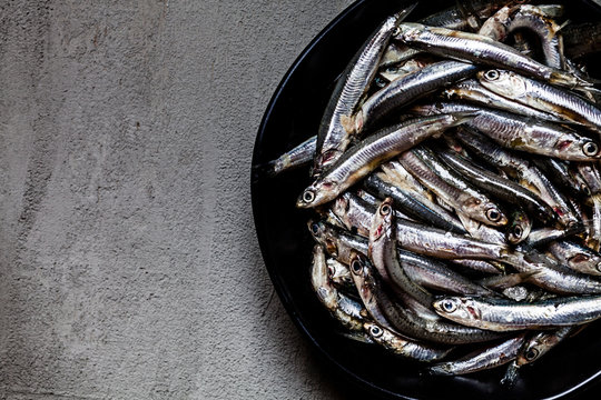 Close-up of fresh anchovies in bowl on concrete